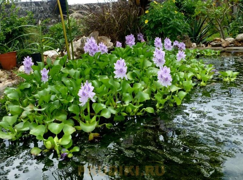 Обустройство садового пруда - строительство, посадка растений, запуск рыб
