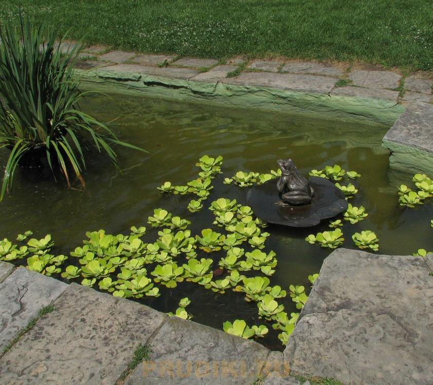 Как обустроить пруд на даче, озеленение, зарыбление, советы