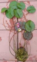 кувшинка цветущая