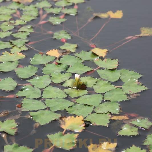 Выбор водных растений, виды и содержание водных растений для пруда