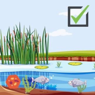 чистый пруд недорого? Очистка быстро