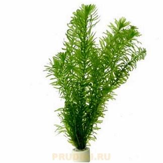 Элодея полезное подводное растение