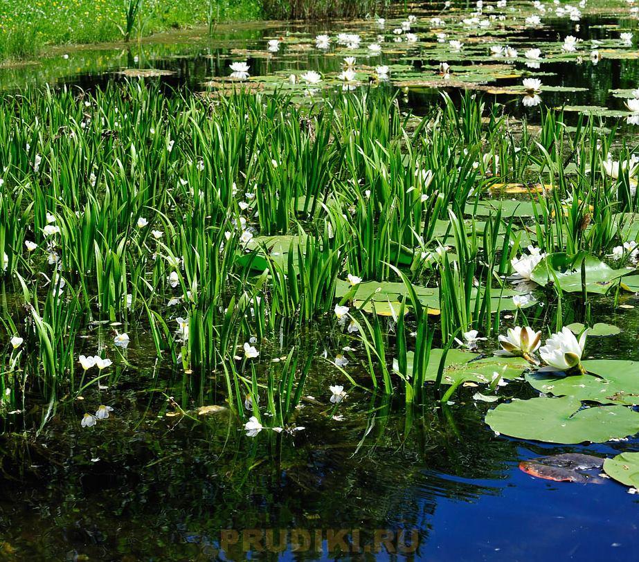Как обустроить пруд на даче, озеленение и зарыбление водоема