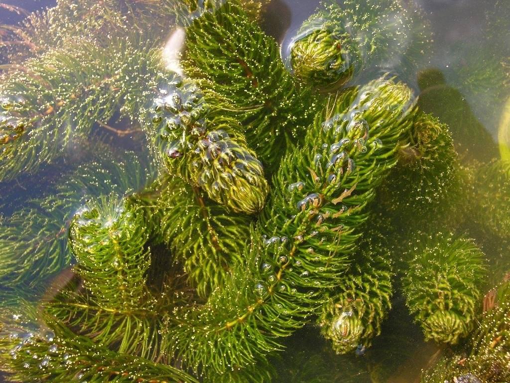 Какие растения растут в пруду? Выбор водных растений и их содержание.