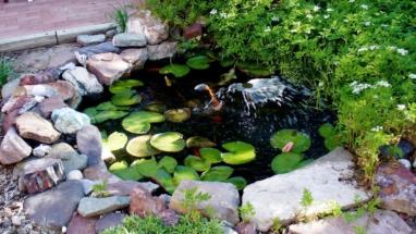 мини пруд с фонтанчиком