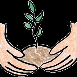 Посадка растений в питательный грунт