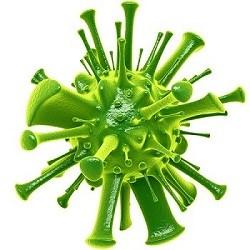 Вредные водоросли в пруду, борьба с мутной зеленой водой, цветение воды в пруду