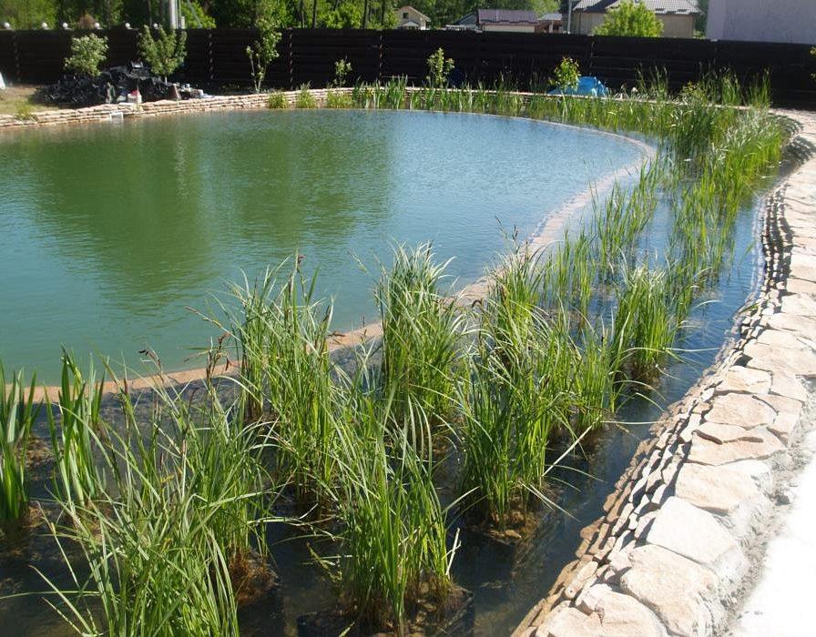 Очищение водоёма с помощью биоплато растений