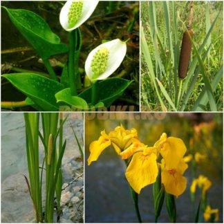 Растения биоплато для пруда (100 шт) № 5