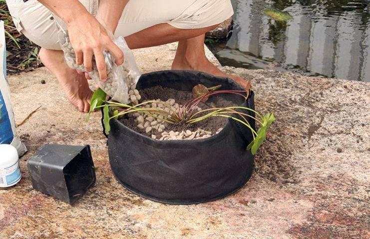 Подкормка для растений в пруду