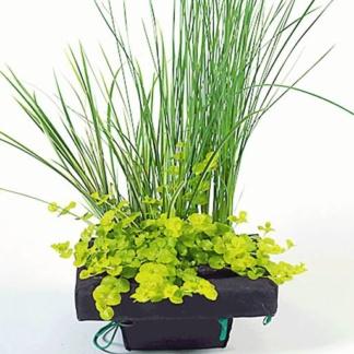 подкормка для водных растений с железом