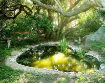 Garden_pond_kupit-vse-dlya-pruda2