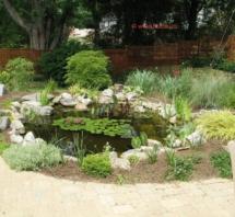 Garden_pond_kupit-vse-dlya-pruda5