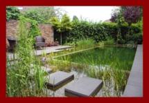 natural-pool-