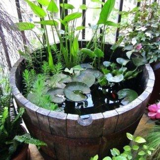 Растения и рыбки для мини-пруда № 8