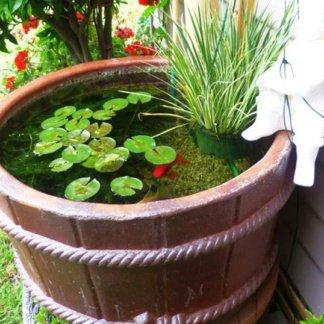 Растения и рыбки для мини-пруда № 7