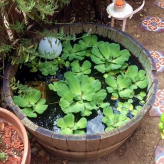 купить растения и рыбу для небольшого пруда