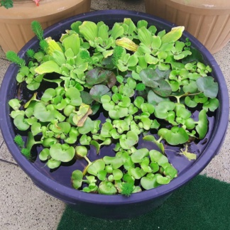 Растения для минипруда № 1