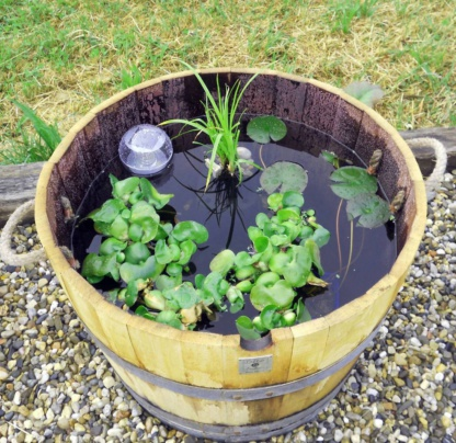 Растения для минипруда № 3