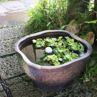 ✔ Растения и рыбки для минипруда для начинающих № 6