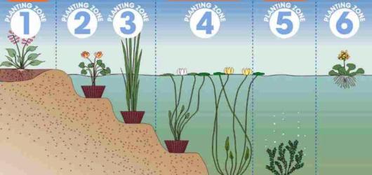 pond-plant-zones