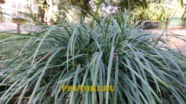Красивые прибрежные растения в пруду Как разводят водоросли для пруда, какие зимующие подводные растения, в водоёме растения лучше для водоёма?