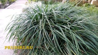 Красивые лотосы и растения в пруду Как разводят водоросли для пруда, какие зимующие подводные растения, в водоёме растения лучше для водоёма?