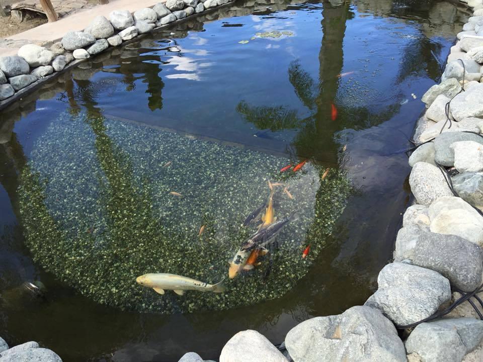♻️ АКЦИЯ! BIOBAC для очистки прудов 5 кг - на 100 м³ воды